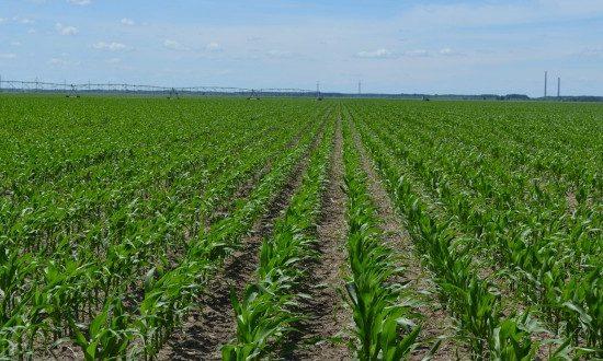PNDR: Măsurile de mediu și climă aplicabile pe terenurile agricole în anul 2018